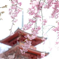 How Japan Has Made Me Count My Blessings